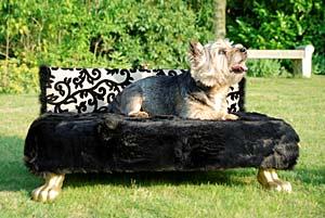 frolki hundecouchen das besondere sofa. Black Bedroom Furniture Sets. Home Design Ideas
