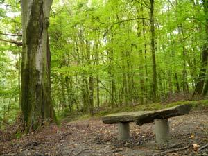 Naturschutzgebiet Langeloh