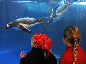 erwachsenen geburtstag im zoo