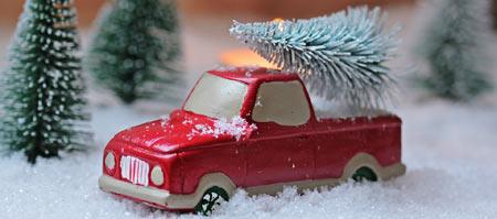 Tannenbaum Selber Schlagen.Weihnachtsbaume Selber Schlagen In Nrw