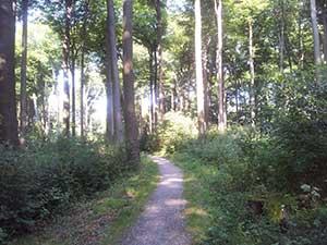 Spazierengehen im grünen Ruhrgebiet - Freizeit und Sport rund um den Ewaldsee in Herten